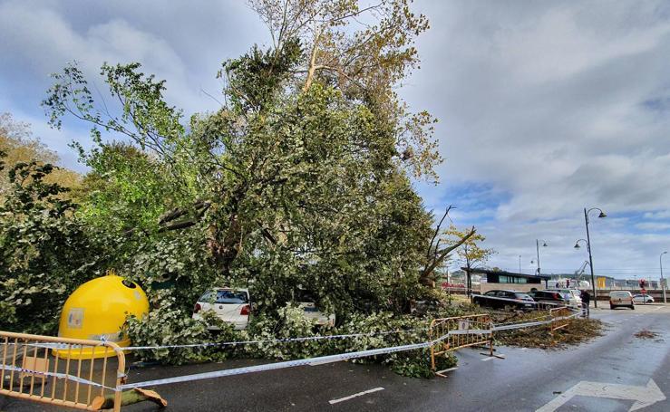 Árboles derribados y coches atrapados por el temporal de viento en el centro de Avilés