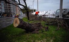 Los destrozos que deja el temporal en Gijón