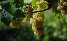 Recetas para aprovechar las uvas