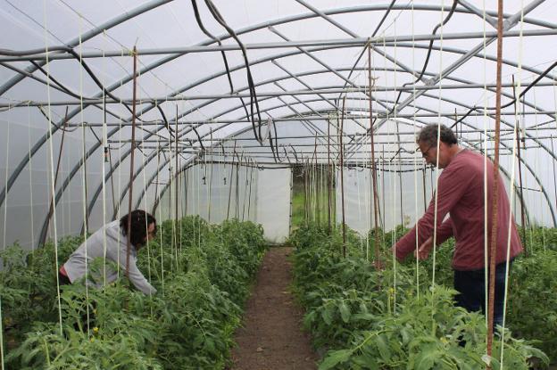 María Celis y Antonio García revisan una de las plantaciones de la Finca El Cabillón, en Tapia. / A .ARRUÑADA