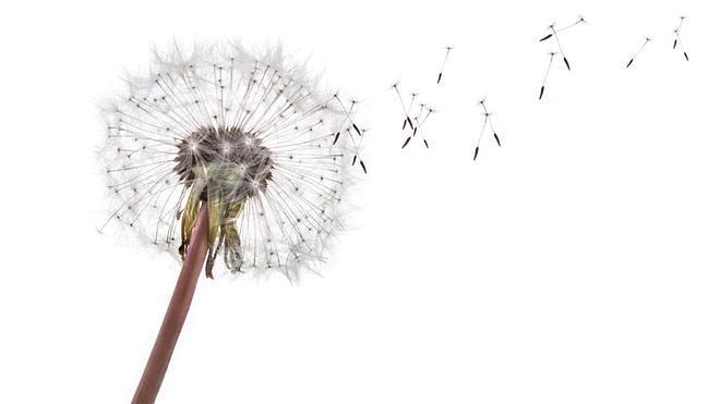 El diagnóstico, uno de los principales problemas de la alergia al polen