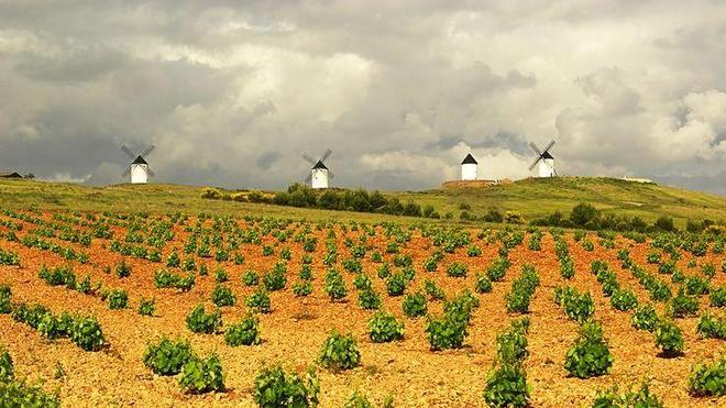 Don Quijote nos 'enseña' sus vinos