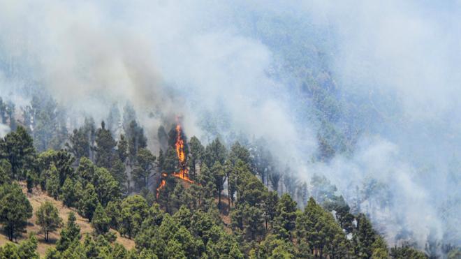 Las brigadas confían en acabar de perimetrar esta noche el incendio de La Palma
