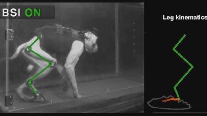 Primates recuperan el control de sus extremidades paralizadas gracias a un puente artificial para su médula