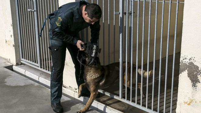 Detenido un hombre de 50 años por dejar morir a ocho perros en un pueblo de Granada