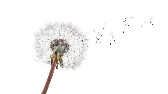 Los alérgicos al polen tendrán una primavera llevadera
