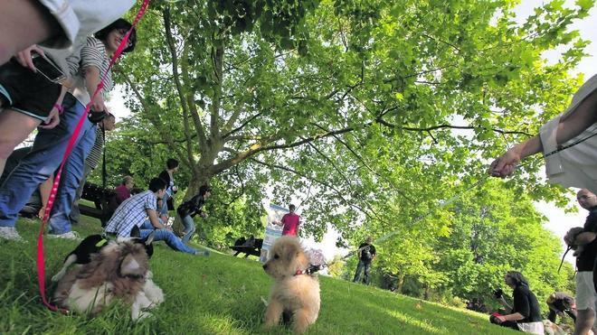 Curso para cachorros y propietarios