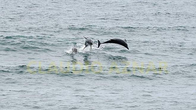 Una decena de delfines comparten olas con los surfistas en Salinas