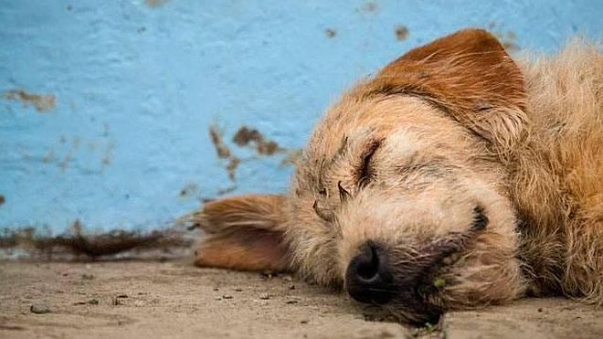 La increíble historia del perro que corrió 30 kilómetros en la selva