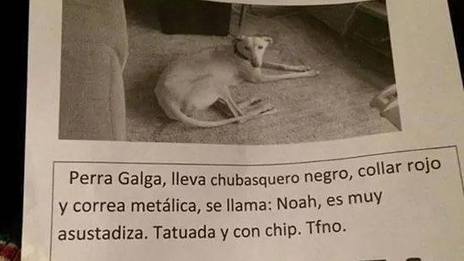 Hacen un llamamiento a través Facebook para encontrar a una perra desaparecida en Gijón