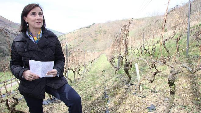 El mejor vino blanco se cultiva en Cangas
