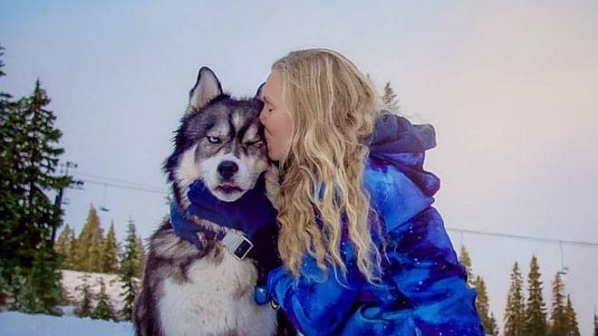 Un husky salva a su dueña de la violencia de su pareja